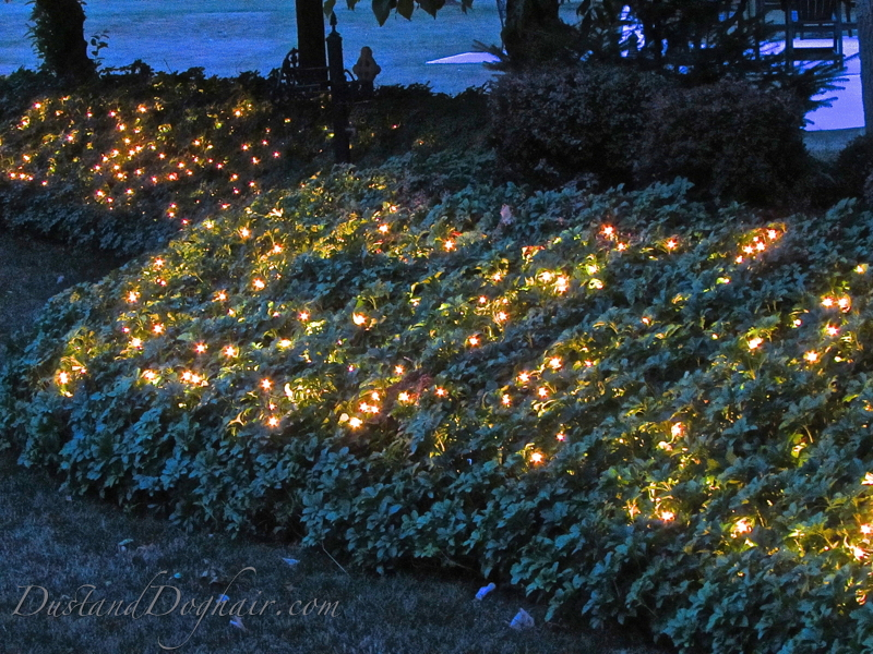 How To String Xmas Lights On Bushes : Garden Lighting ?Magical? Ground Cover DustandDoghair.com